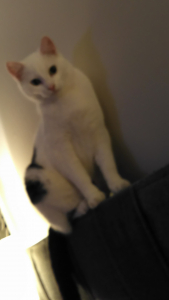 39207-Kitty1.jpg